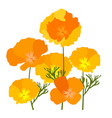 california poppies vector image vector image