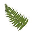 color image fern leaf vector image
