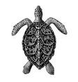 hawksbill sea turtle engraving vintage vector image vector image