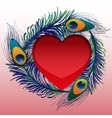 Beautiful heart with peacock feathers vector image