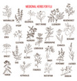 best medicinal herbs for flu vector image vector image