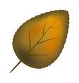 orange leaf symbol icon design vector image vector image