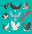 fllying birds cartoon cute vector image