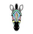 zebra head on white vector image