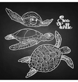 Hawksbill sea turtle collection vector image