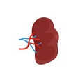 brown kidney icon flat style vector image