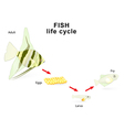 Fish life cycle vector image vector image