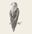 sitting eagle hand draw sketch vector image