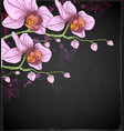 pink orchids and butterflies vector image