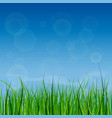 bright and juicy green grass on a blue sky vector image vector image