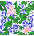seamless texture morning glory and wild roses vector image