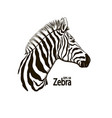 zebra beautiful animal pattern vector image vector image