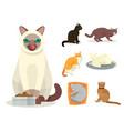different cat breeds cute kitty pet cartoon cute vector image vector image
