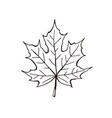 leaf icon isolated vector image vector image