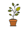 colorful silhouette of plant in flower pot with vector image