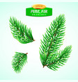 set fir branches christmas tree pine tree vector image