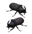 Black beetle rhinoceros on white background vector image
