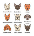 dogs breeds color icons set vector image