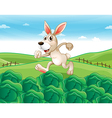 A bunny running at the farm vector image vector image