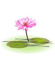 pink lotus plant icon vector image vector image