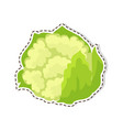ripe cauliflower flat isolated sticker or vector image vector image