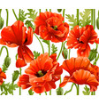 seamless pattern red poppies realistic vector image vector image
