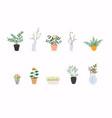 set decorative house plants flowerpot isolated vector image
