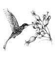 hummingbird in flight drawing vector image