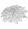 beautiful monochrome sketch black and white vector image vector image