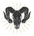 ram skull design elements for label sign logo vector image