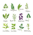 set herbs isolated vector image