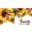 bees making honey from sunflower watercolor vector image