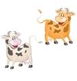 funny Cows vector image