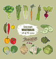 hand drawn vegetables set of 15 icons vector image