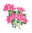 pink rhododendron twig with flowers and leaves vector image vector image