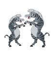 two zebras dancing vector image