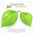 Green two leaves text vector image