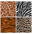 zebra giraffe and leopard patterns vector image vector image