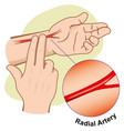 person measuring pulse artery radial vector image vector image