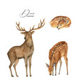 watercolor set with deer doe and fawn vector image