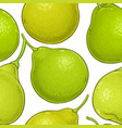 bergamot fruit pattern on white background vector image vector image