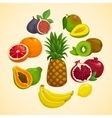 Tropical fruits collection Cartoon vector image
