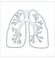 Anatomical lungs isolated on white vector image