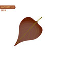 autumn lilac leaf isolated on a white background vector image vector image