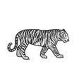 walking tiger sketch vector image vector image