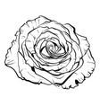 beautiful monochrome rose hand-drawn vector image