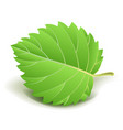 green leaf with small stem isolated cartoon vector image vector image