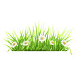 label with green grass and daisies vector image vector image