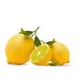 Lemons realistic vector image vector image