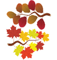 elm and maple leaves vector image vector image